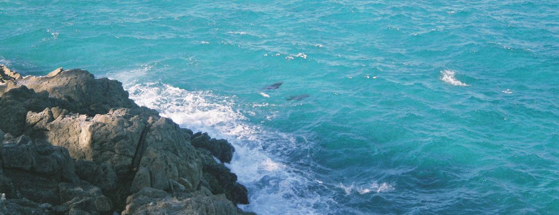 Ocean Monkeys